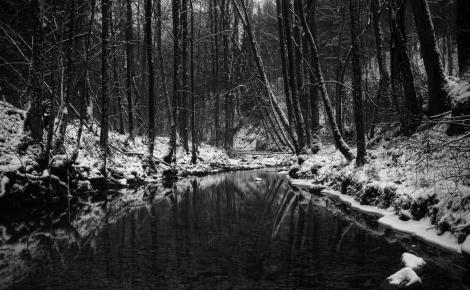 Dark-Winter-Forest-Wallpaper-1